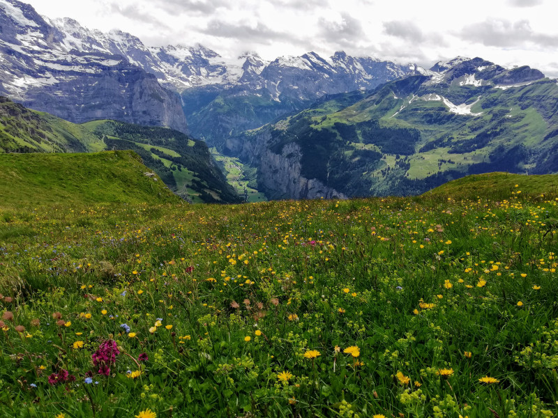 Meadow with Lauterbrunnen valley