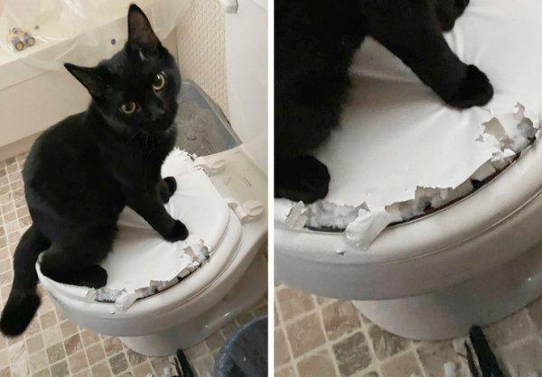 Кот на утиназе