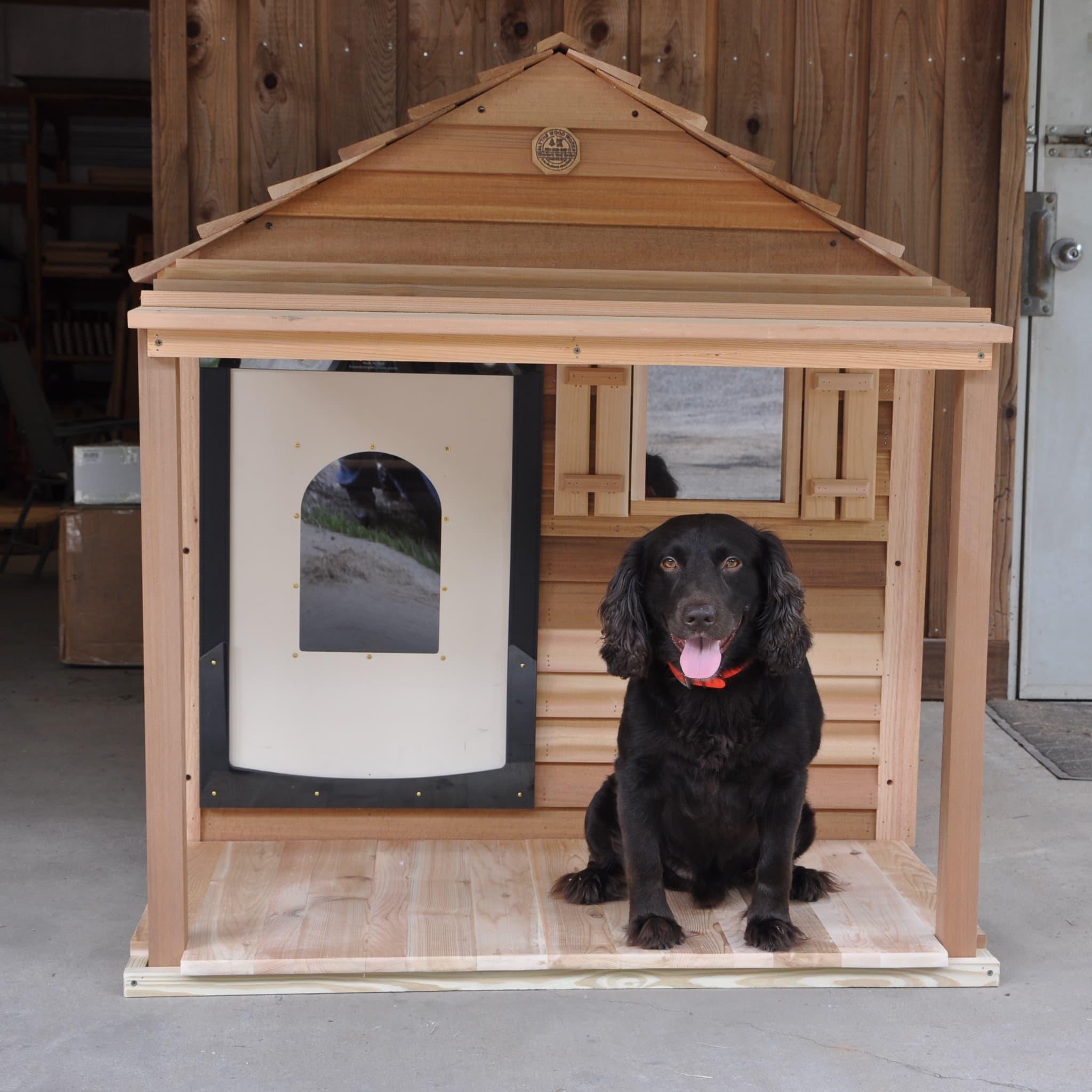 dog training jakarta