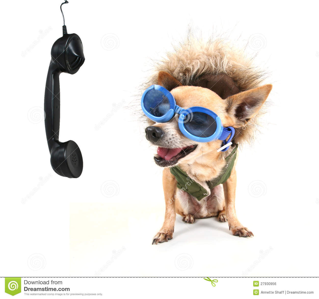cute-chihuahua-talking-phone-27930956