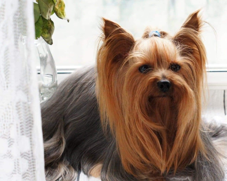 Dog-Hair-Detangler-Deshedding-Dematting-i5k