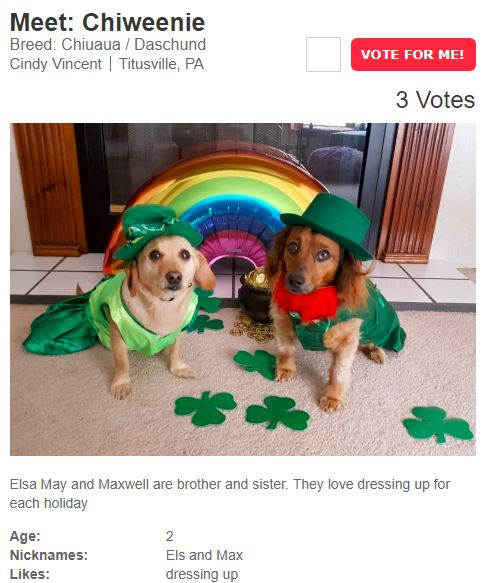 St-Patrick-s-Day-Pet-Costume-Contest