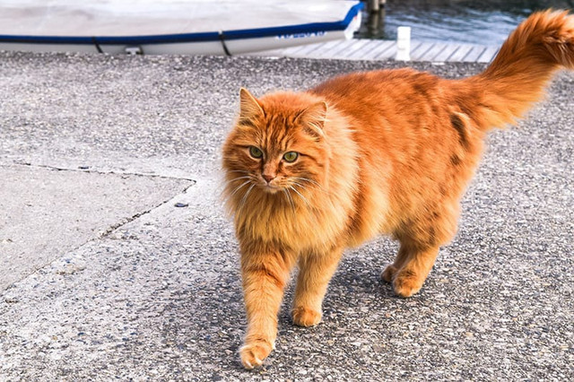 orange-cat-names-2
