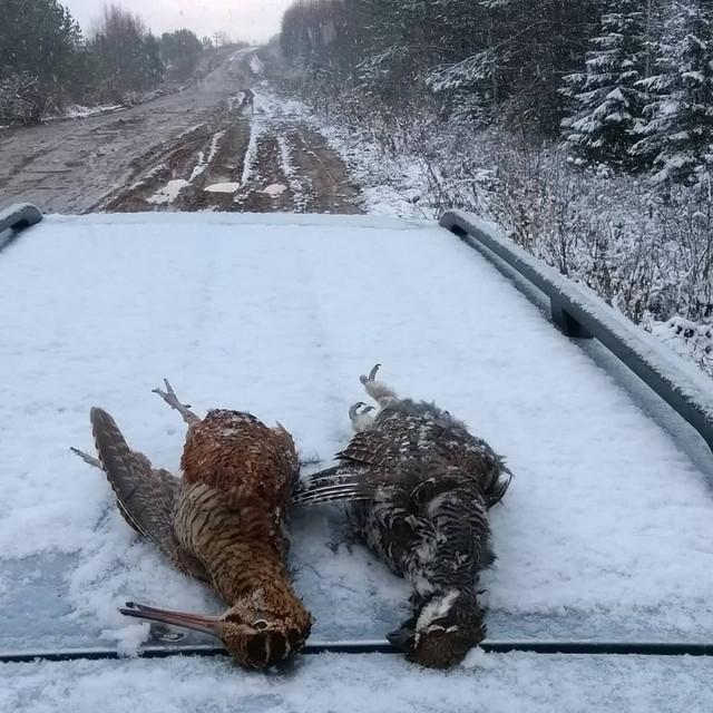 woodckocks-snow