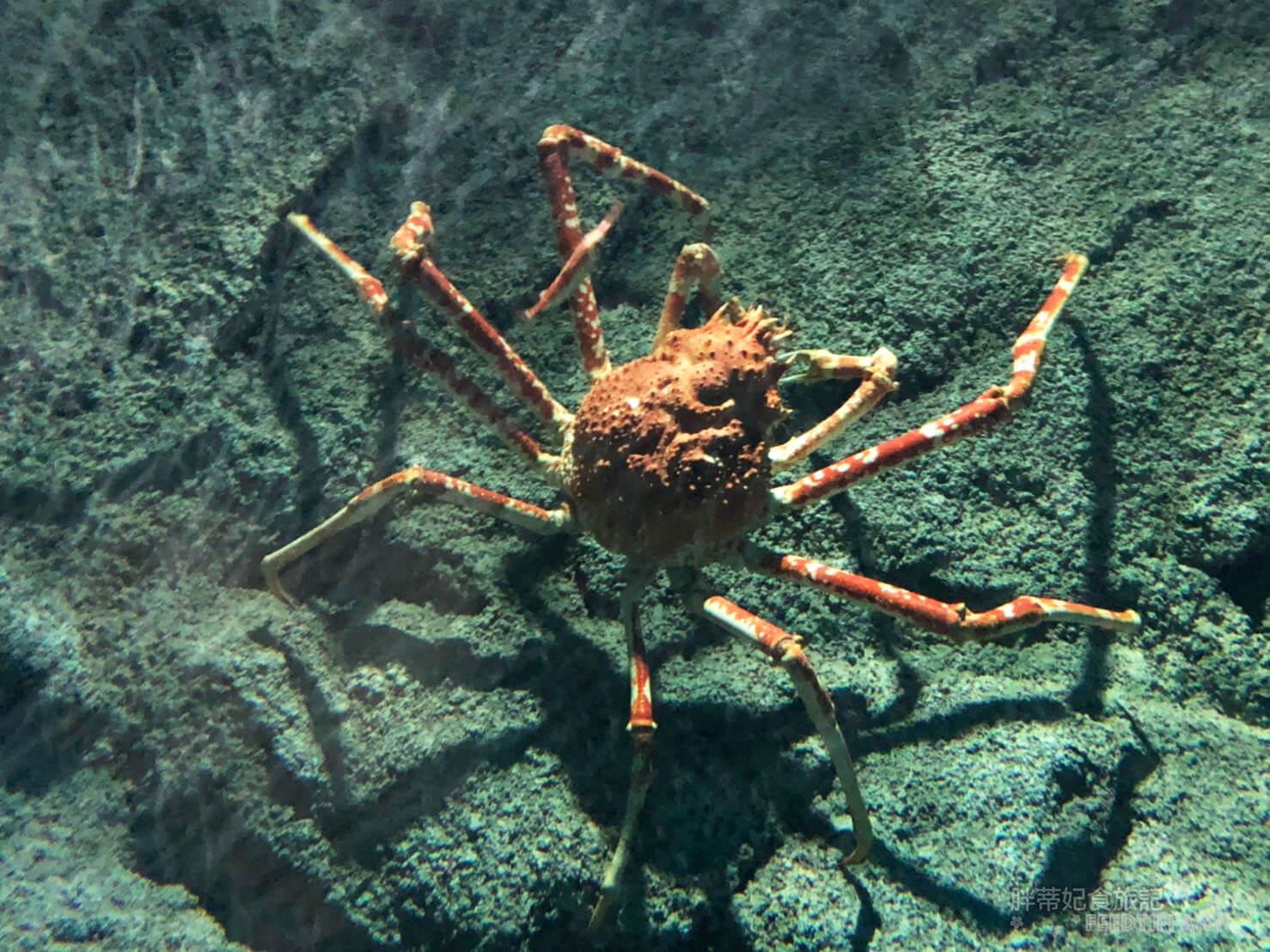 Xpark水族館 深海尋覓 大螃蟹