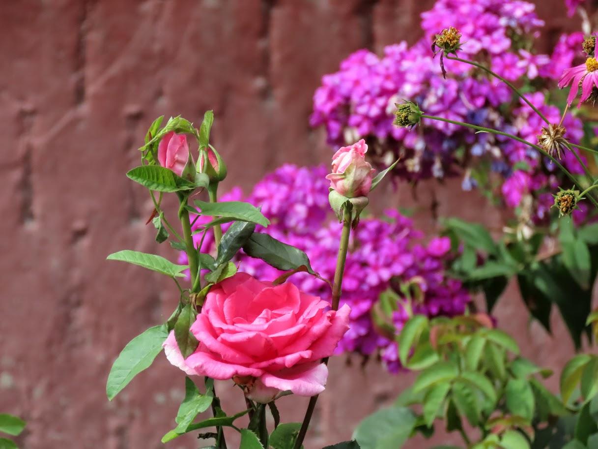 Засентябрило. По старому стилю ещё лето, осень начнётся 14 августа)38 фото 35712238