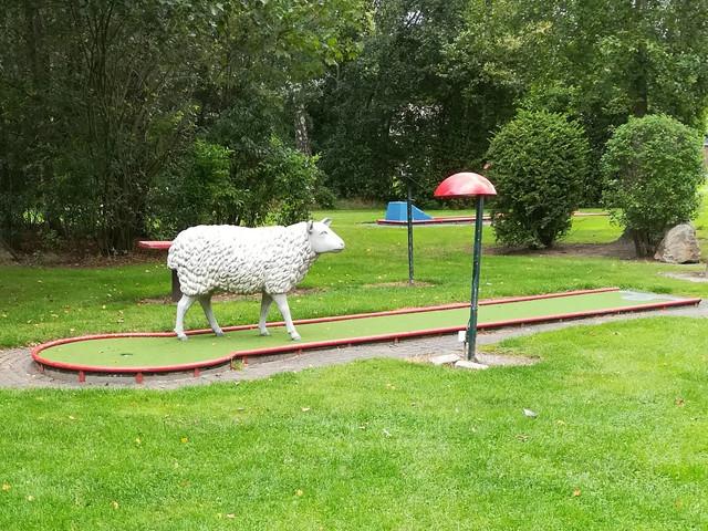Sheepgolf.jpg