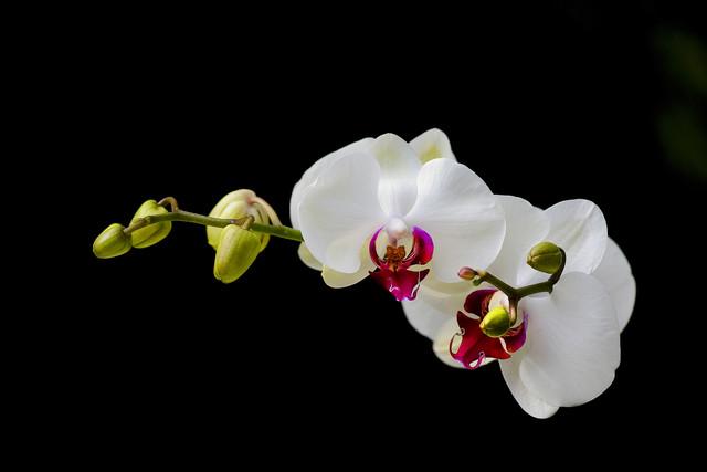 Thème du mois d'octobre 2019 :   Fleurs et jardins  Orchid-e