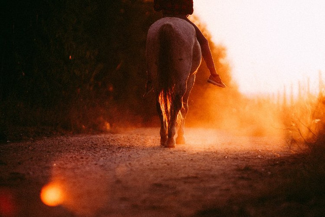 person-riding-horses-during-sunset-3859349