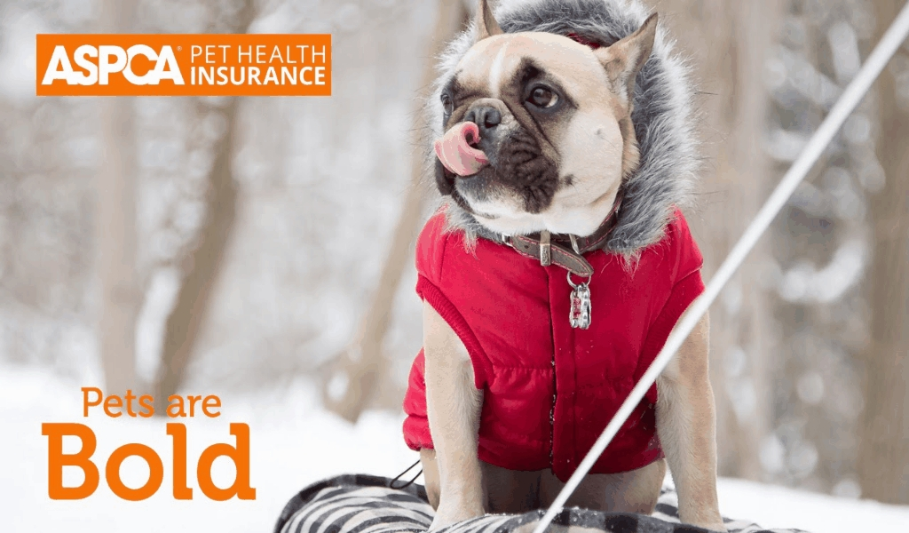 Pet Health Odd stuff  Insurance