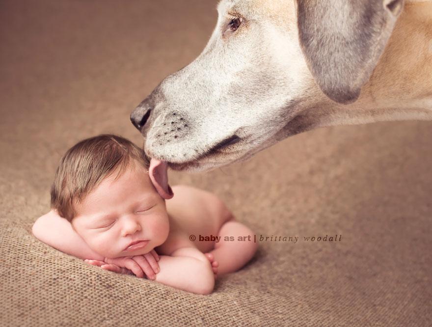 Когда собаки большие, а дети маленькие - 44 потрясающие фотографии - 11