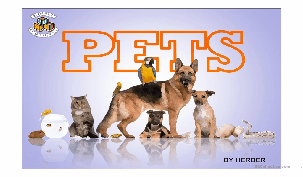 Pets Adoption Websites