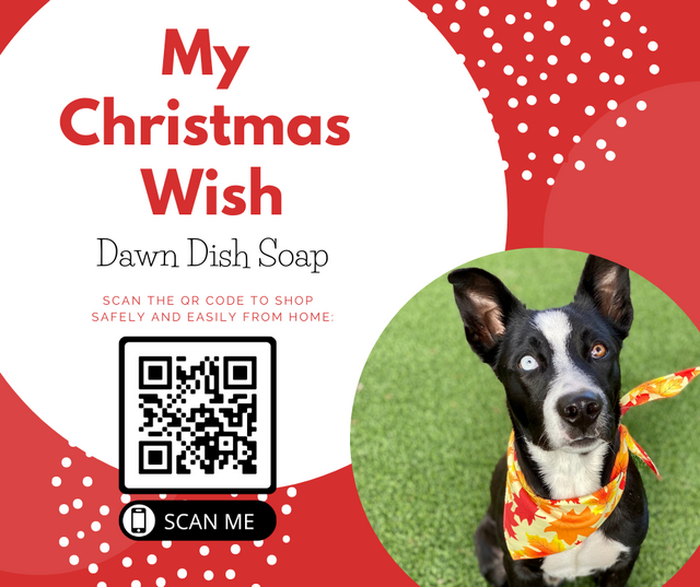 Animal-Services-2020-Angel-Tree-059.png