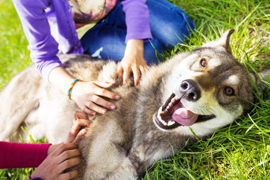 37 фотографий животных, которые вызывают улыбку - 20