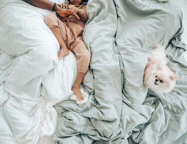 https://i.ibb.co/mqkFLtL/online-store-for-Pomeranian-puppies.jpg