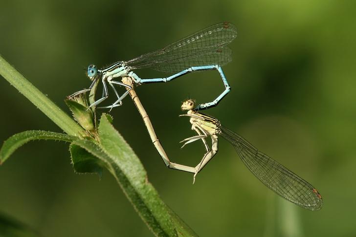 Удивительные животные, с созданием которых матушка-природа немного перестаралась