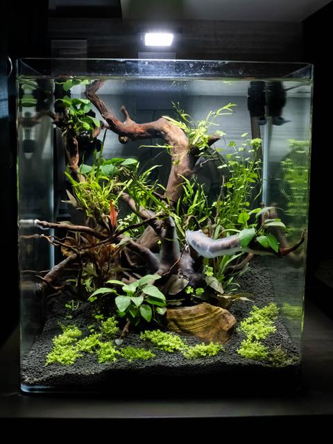 "Nanocube 60L ""Jungle"" DSCF2443"