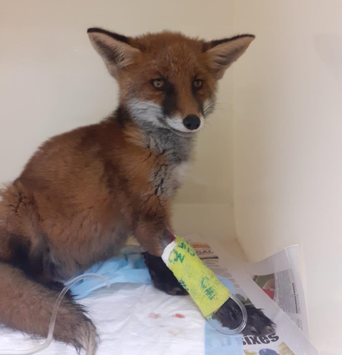 Fox Referral