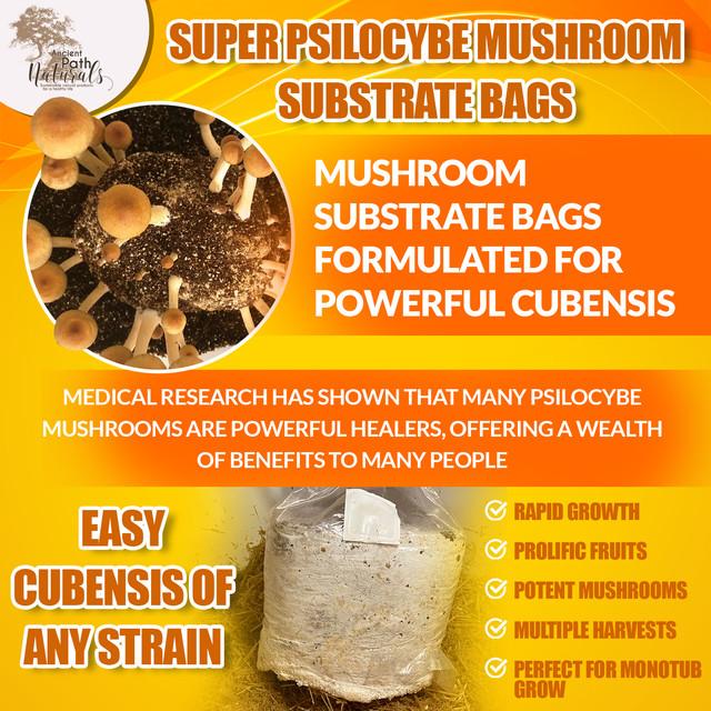 https://i.ibb.co/mtqZnkK/Psilocybe-cubensis-mushroom-monotub-substrate.jpg