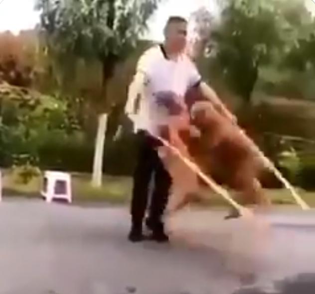 跟狗狗們一起跳繩 Image