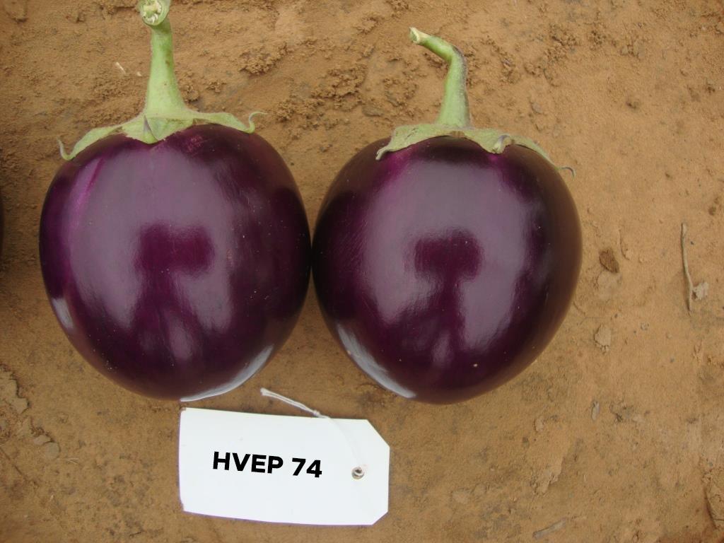 HVEP-74