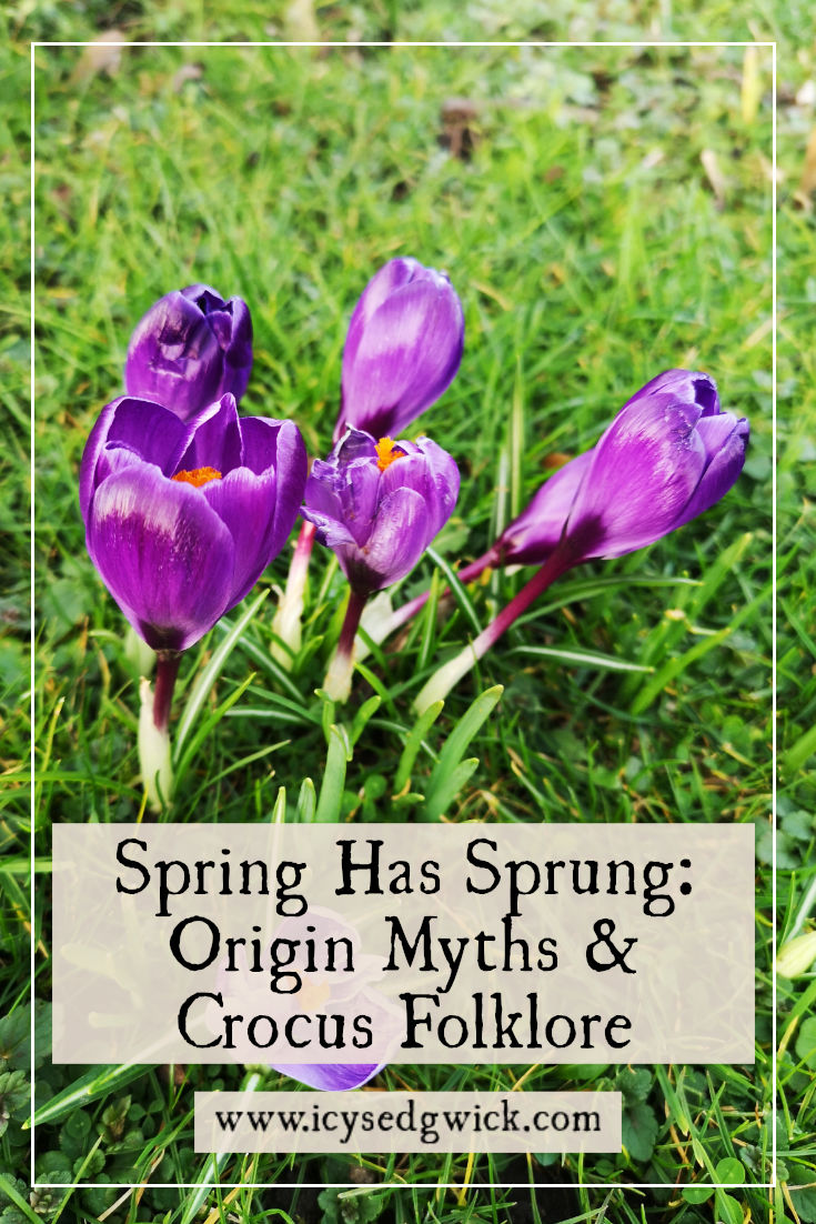 The humble crocus pops up every spring. But where does mythology say it came from? Find out more about its origins and folklore here.