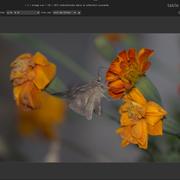 [Image: papillon-ori.png]