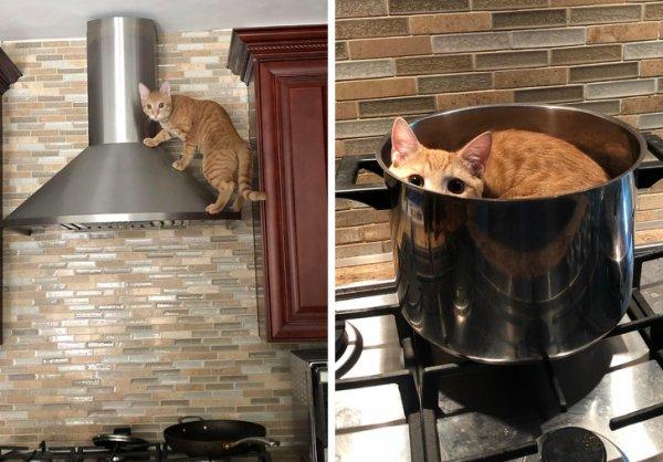 Рыжий кот на кухне