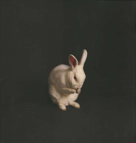 Brume - Rabbits