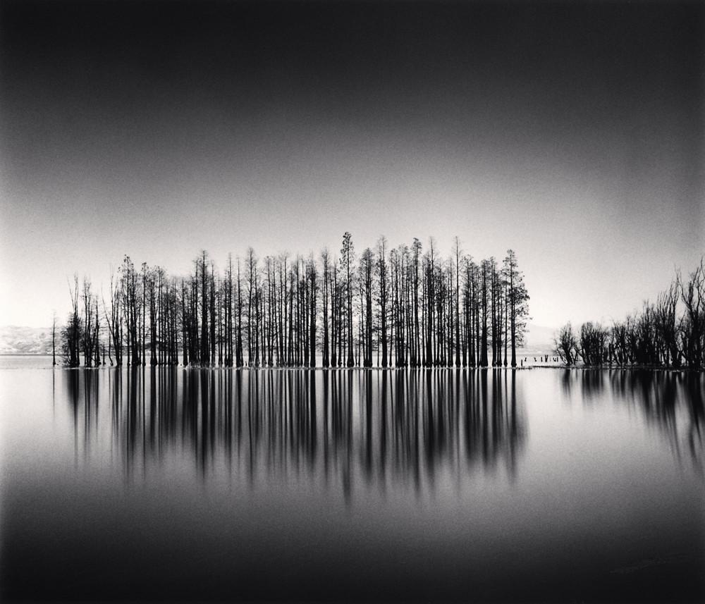 Портреты деревьев Майкла Кенны 13