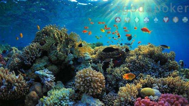 Ilmuwan Sebut Manusia Kian Berdampak Merusak Lautan Ini Alasannya