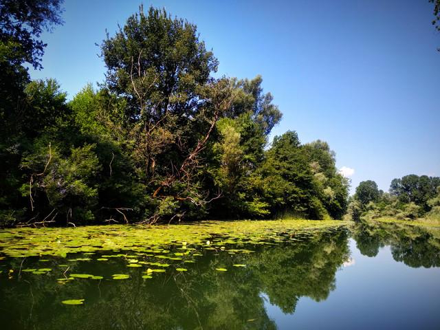Mušičarenje klena na Skadarskom jezeru IMG-20190720-104357
