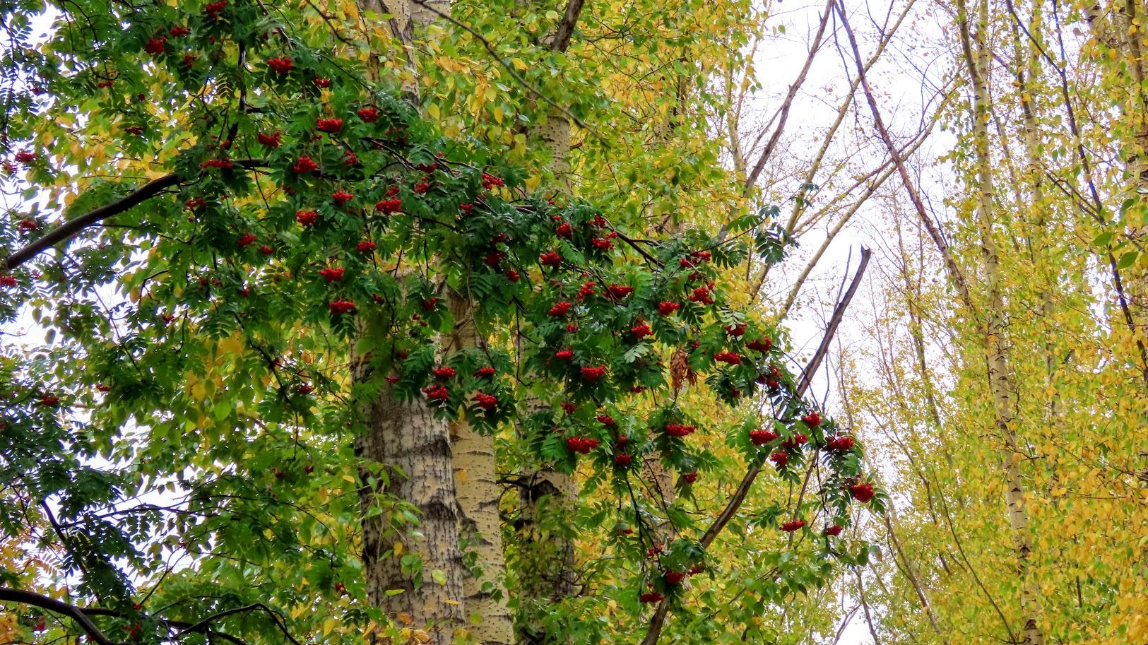 Чайка, шершни и собачки. В Комсомольском парке( 21 фото) 35859586