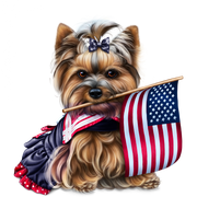 yorkie-4th-of-july-6
