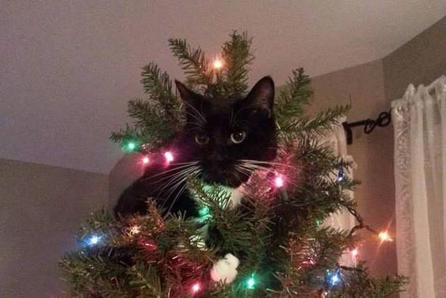 聖誕樹長貓系列,不會長出貓咪的聖誕樹不是一棵好聖誕樹 8