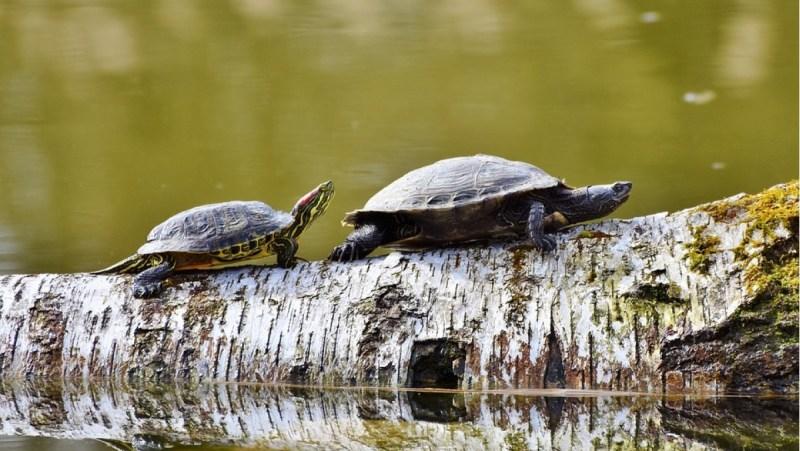 vsemirnyi-den-cherepahi-world-turtle-day-1145.jpg