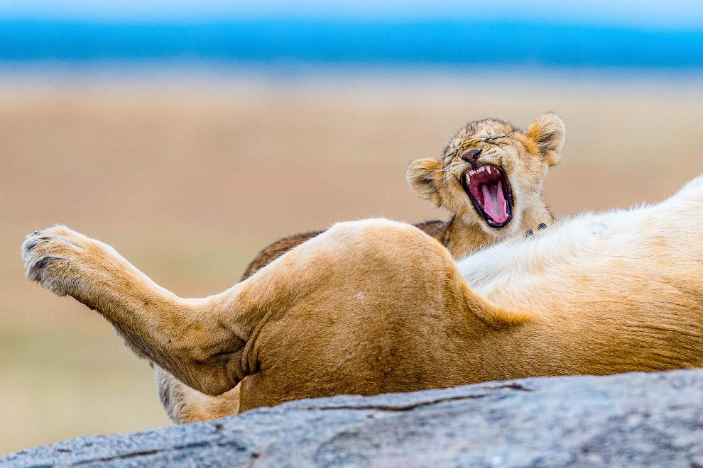 Уставшие животные в фотографиях