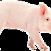 piggy2.png