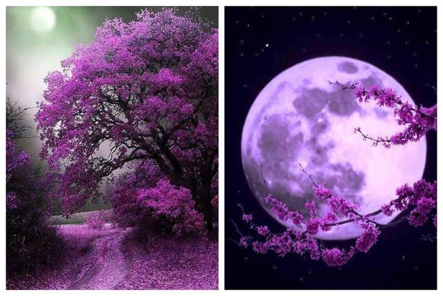 Ритуалы лунных дней