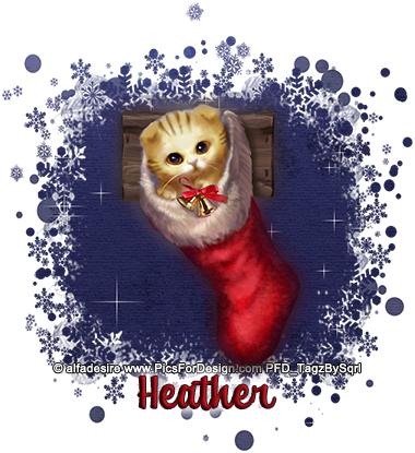 Heather-Stocking-Cat-2-tbs