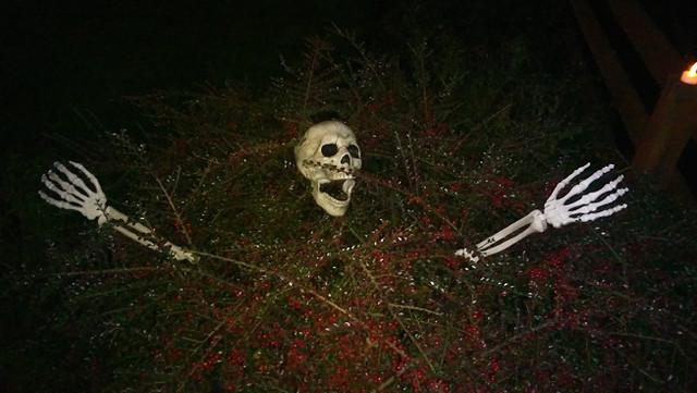 Skeleton-Bush