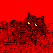 cat-with-coloured-eyes-wallpaper.png