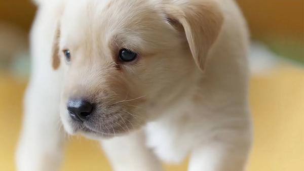 تفسير رؤية الكلاب في المنام 2020 دلالات ومعنى الكلب أو عضة الكلب في الحلم 1.jpg