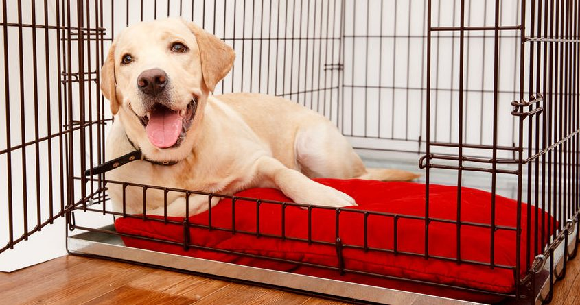 Dog cages: Which one is the best of 2021?