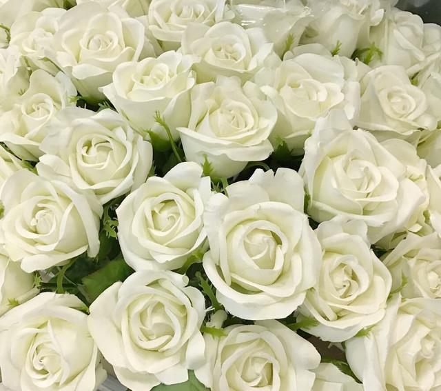 rosa-bianca-2-tiny