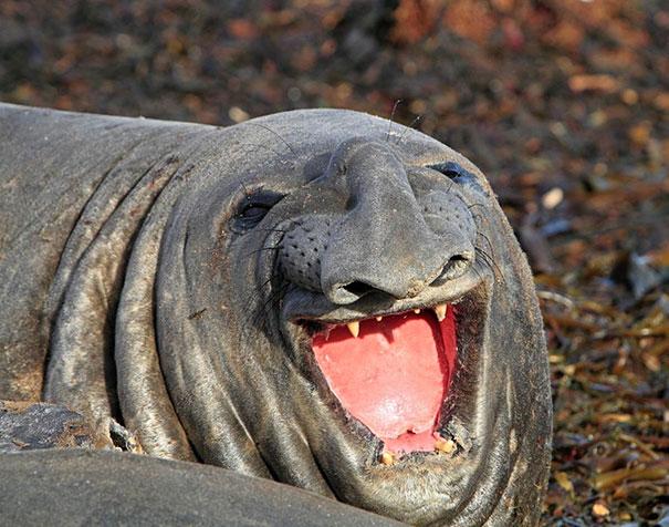 30 фотографий самых счастливых животных на планете-3