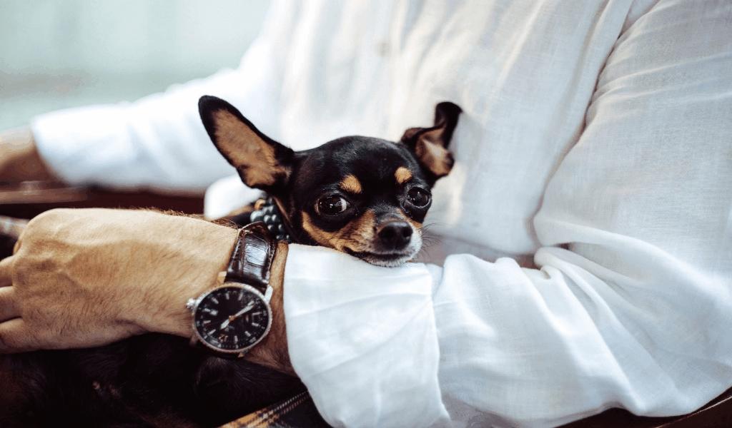 Pets Insurance Reviews
