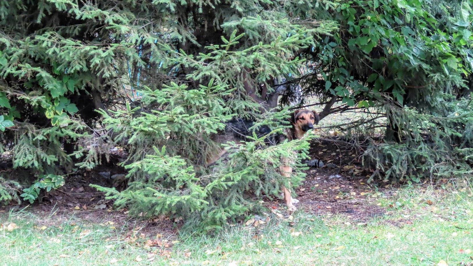 Чайка, шершни и собачки. В Комсомольском парке( 21 фото) 35859961