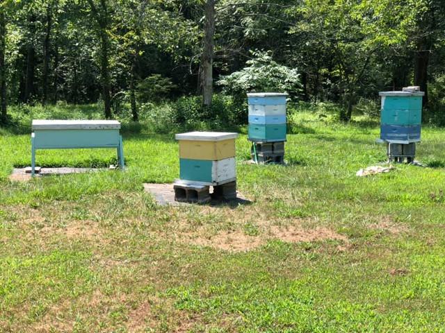 last-year-bee-yard