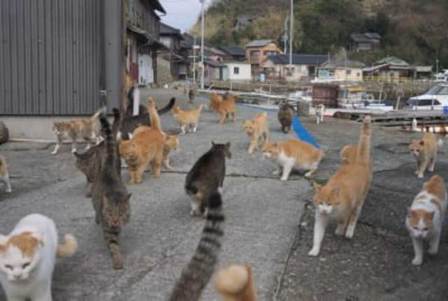 кошачий остров в Японии